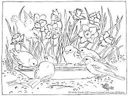 Coloring Page Of Daffodils And Birds