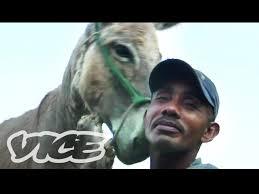 English women fucking donkeys