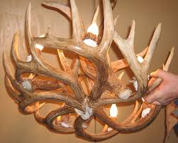 antler chandeliers intended for well liked whitetail deer antler chandelier gallery 9 of 20