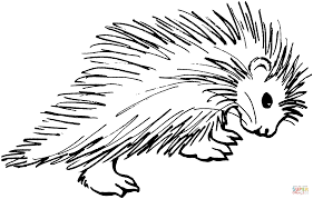 Small Picture Porcupine 4 coloring page Free Printable Coloring Pages