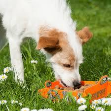get ations german major dog multifunction folding portable dog bowl dog water bowl bowl outdoor folding