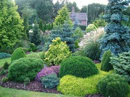 Small Picture Best 25 Evergreen shrubs ideas on Pinterest Shrubs Dwarf