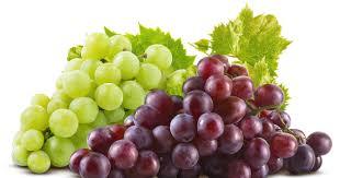 Resultado de imagem para uva