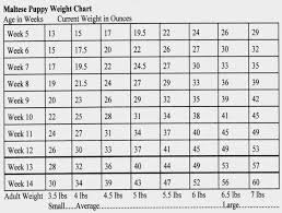 Boxer Puppy Weight Chart Boxer Puppies Weight Chart Bogas Gardenstaging Ivanpik Net