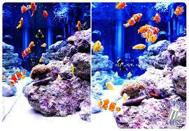 r reef tank fish cs flourishing red aquarium light led lighting diy guide schedule