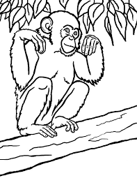 Small Picture Chimpanzee Coloring Pages GetColoringPagescom