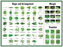 73 Proper Tree Leaf Chart