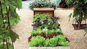 11 Helpful Tips For Planning A Spectacular Fall Vegetable Garden Fall Garden Crops