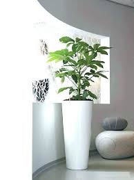 tall large white planter outdoor planters uk square plant pots spruce outstanding ceramic black