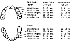 When Do Babies Get Teeth Chart When Do Babies Get Teeth Your Babies First Teeth