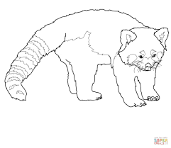 Small Picture Red Panda coloring page Free Printable Coloring Pages