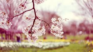 Home » nature wallpapers » spring wallpapers. Flowers Laptop Wallpapers Top Free Flowers Laptop Backgrounds Wallpaperaccess