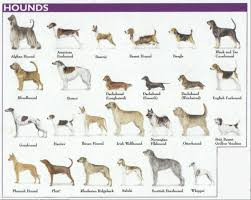 Dog Breed Chart With Names Big Dog Breed Chart 2019