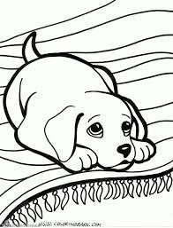 Niewu Tekeningen Van Honden Kleurplaat 2019