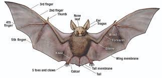 Image result for bat photo