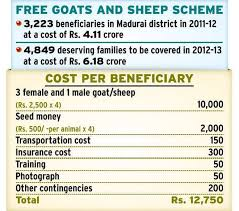 De Worming Of Goats And Sheep On July 7 The Hindu