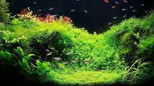 Aquarium Backgrounds Freedowload ...