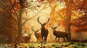 animals wallpaper. Delighful Wallpaper Preview Wallpaper Deer Grass Leaves Autumn Trees In Animals Wallpaper A