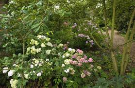 Small Picture Woodland edge Wild About Gardens