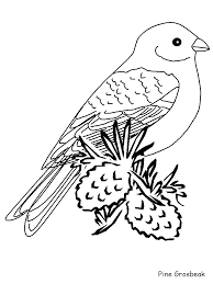 Free printable cat coloring pages for kids with real. Realistic Bird Coloring Pages Coloring Home