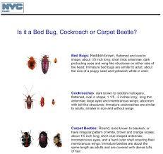 Small Beetles In Bedroom Carpet Beetle Or Bed Bugs Carpet Vidalondon