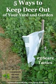 keep deer out of your garden 5 deter and tricks