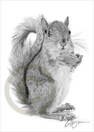 Small Picture Drawn contrast squirrel Pencil and in color drawn contrast squirrel