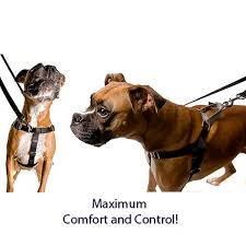 2 Hounds Harness Size Chart Jellybean Sugar Freedom No Pull Dog Harness Optional Leads