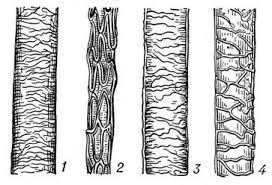 Биология Антропологические методы оценки волос Реферат Учил Нет  Волосы