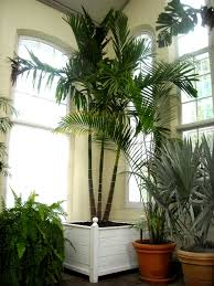 Tall House Plants For Best Indoor Gardening