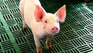 En Venta Granja Porcina En Mercado Libre MéxicoPrecio Granja De Cerdos Engorde