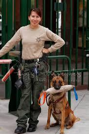 Arizona Correctional Officer 2012 Desert Dog Police K9 Trials Scottsdale Az Fsrau