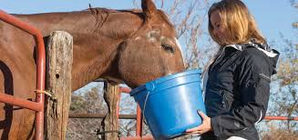 15 best horse feed for weight gain