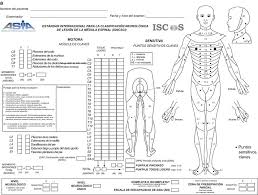 Spinal Cord Injury Chart Asia Chart Our Contribution Spinal Cord