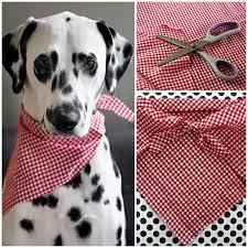easy no sew pet bandana