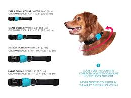 Small Dog Collar Size Chart Kong Collar Size Chart Bedowntowndaytona Com