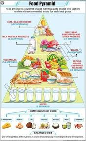 Food Group Pyramid Chart Food Pyramid For General Chart