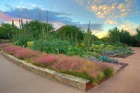desert botanical garden arizona gardens phoenix az s