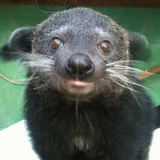Small Picture Baby binturong Squishies Pinterest Animal Wild life and