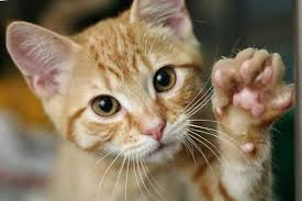 Cat Scratching Solutions Please Do Not Declaw CatScratching