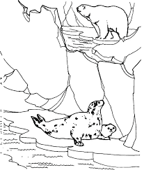 Seals Coloring Pages Seals Coloring Pages Polar Bear Hunt Seals In