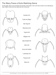 Small Picture Ant Handouts Inside Ask A Biologist Coloring Page creativemoveme
