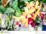 thai orchid oslo escort damer