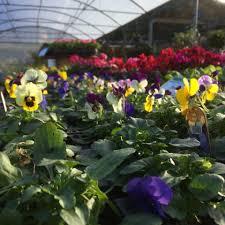 a list of bristol garden centres and