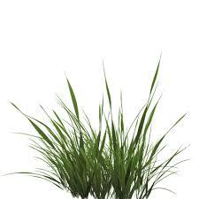grass transparent background. Tall Grass Texture Alpha Image #44173 Grass Transparent Background D