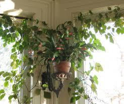 Plant Amazing Cool House Plants Charming House Design Scheme