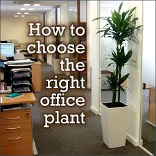 plants for office cubicle. best 25 office plants ideas on pinterest indoor inside and low light for cubicle