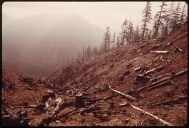 deforestation effects causes and examples top list science  6 soil erosion