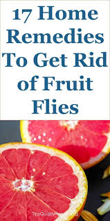 Best 25 Fruit flies in house ideas on Pinterest