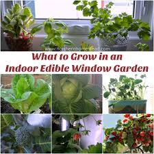 what to grow in an indoor edible window garden over the years we have grown